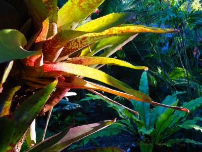 b2ap3_thumbnail_tropical-foliage.jpg